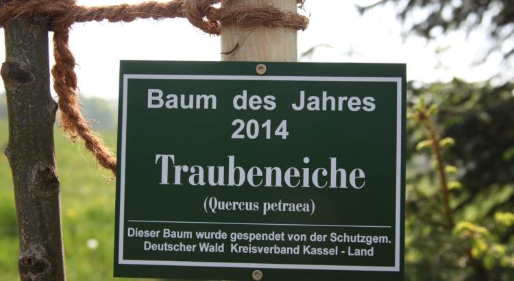 Schild Traubeneiche - Baum des Jahres 2014